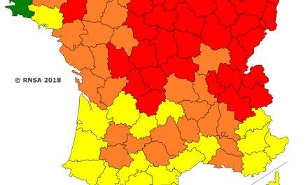 En Isère: alerte rouge aux pollens de bouleaux