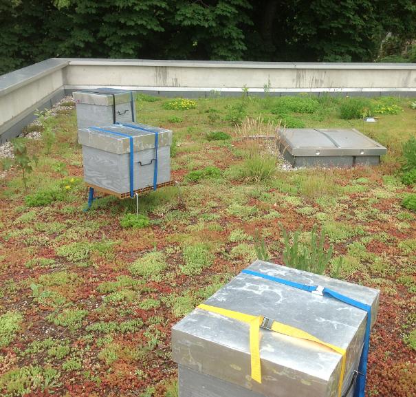 Trois ruches sur le toit de l'Office du Tourisme de Vienne: elles butinent en ville…