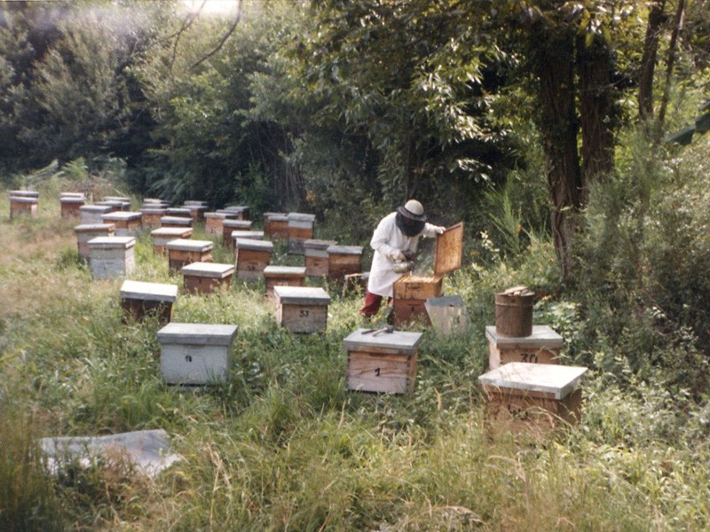 Abeilles : les vols de ruches en forte hausse dans la région viennoise