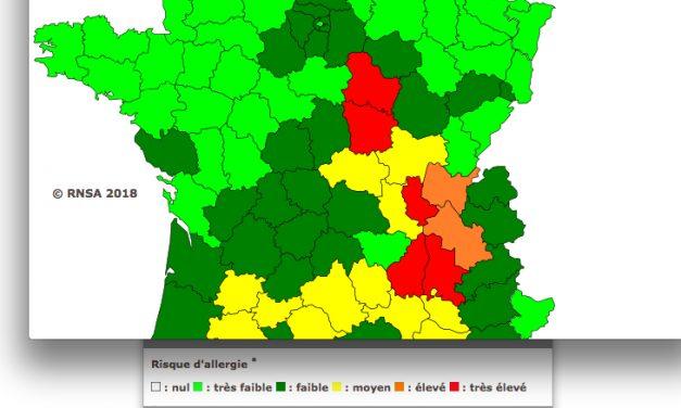 Pics attendus en Isère et dans le Rhône: les pollens d'ambroisie font leur rentrée !