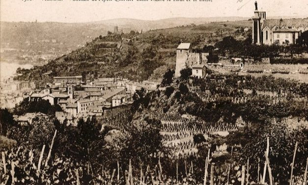 Bientôt le retour des vignes sur la colline de Pipet à Vienne, au-dessus du théâtre antique