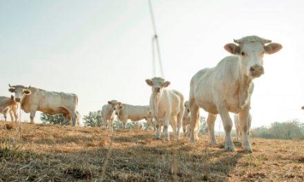 «Alerte» décrétée dans le Nord-Isère: déjà la sécheresse!
