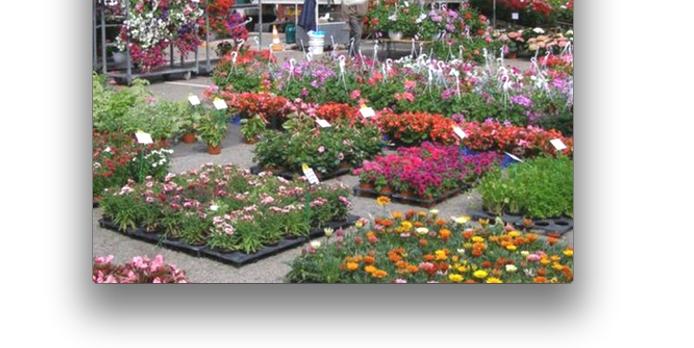 «Vienne en fleurs», dimanche l'Espace Saint-Germain : le végétal dans tous ses états…