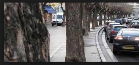Attaqués, fragilisés, 500 arbres de la Ville de Vienne vont être traités avec des produits…«biocontrôle»