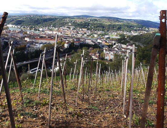 Sur 1,5 hectare planté en syrah et viognier : du vignoble désormais en Vallée de Gère à Vienne !