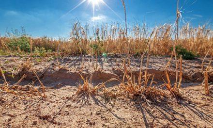 Vienne et 36 communes de l'Isère rhodanienne mises en alerte sécheresse par la préfecture de l'Isère