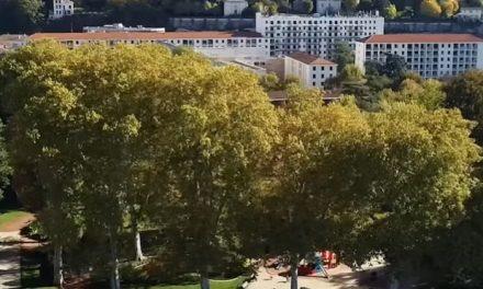 Contrairement à ceux des espaces naturels, les 4 300 arbres qui poussent à Vienne sont en bonne santé. Explications.