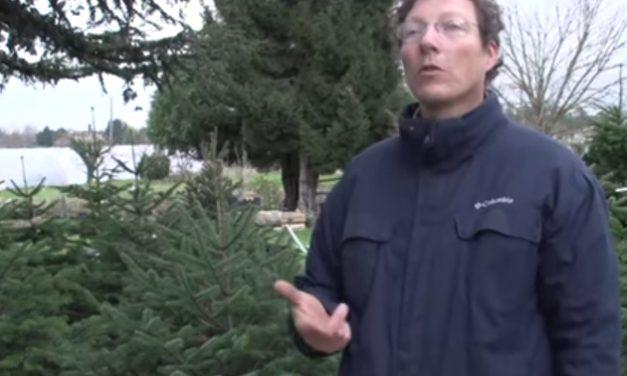 Une pépinière de sapins de Noël à Vienne, Ryma Prost-Romand, entrepreneure de l'année, etc. : le journal TV de la semaine