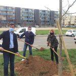 D'ici cinq ans, l'espace urbain viennois comptera 25 % d'arbres en plus…