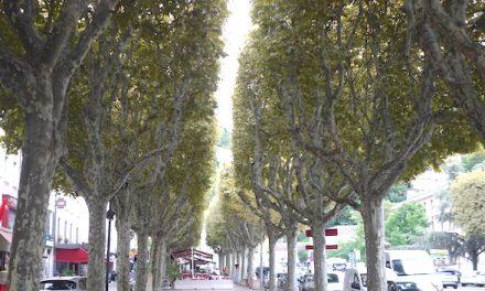 """Pour lutter notamment contre """"le tigre du platane"""", de nombreux arbres traités cette nuit à Vienne"""