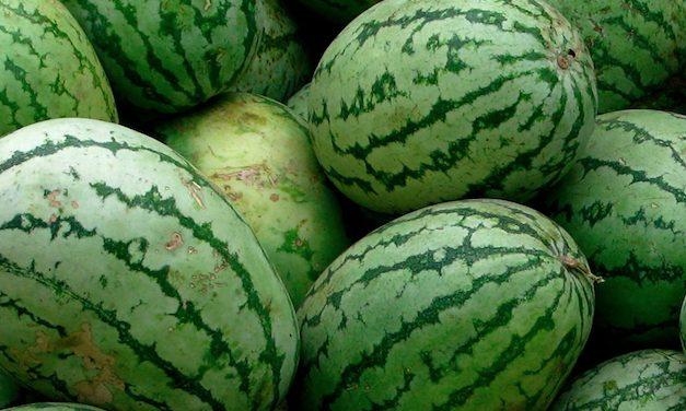 Au péage de Reventin-Vaugris : près de 400 kilos de drogue dans le camion bourré de pastèques
