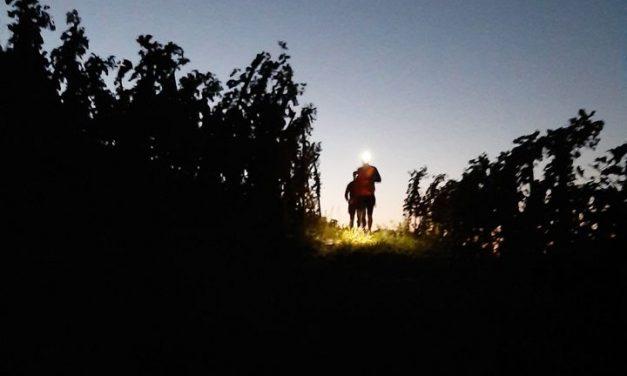 Avec un dénivelé de 1 200 mètres en semi-nocturne : Ampuis organise samedi le 1er trail en Côte-Rôtie